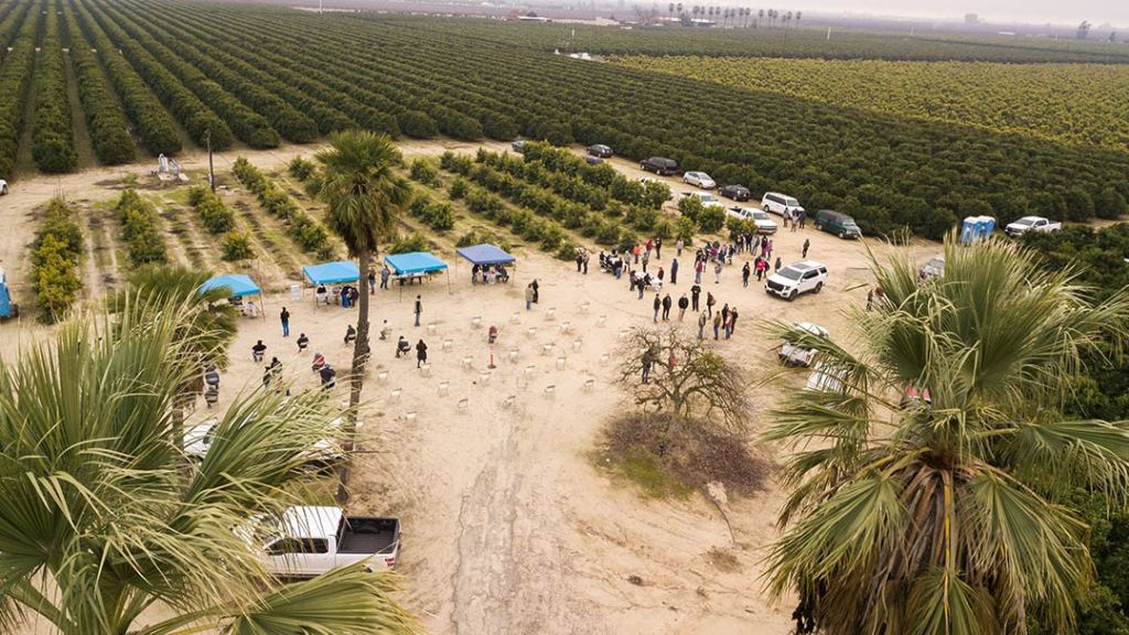 Aerial view of vaccine event in an orchard, with palm trees in the foreground