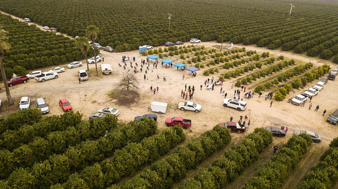 Aerial view of vaccine event in an orchard