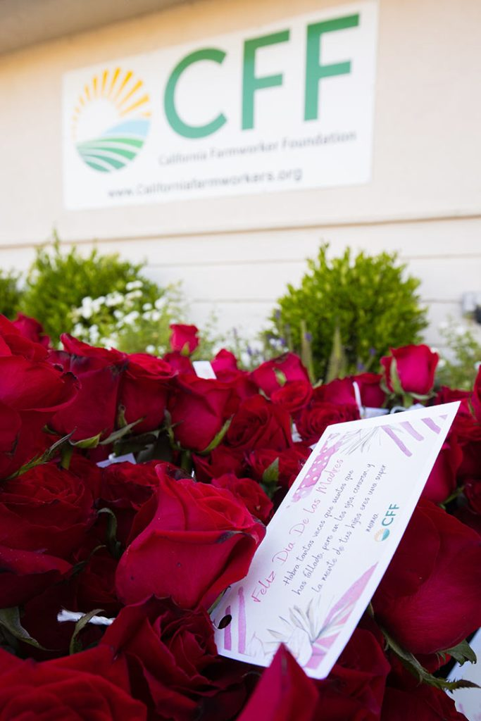Red roses with Mother's Day cards attached for farmworkers supported by California Farmworker's Foundation