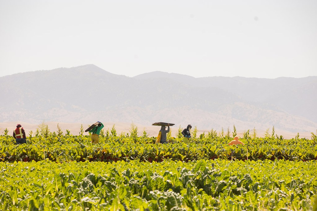 Women working in a field on Mother's Day