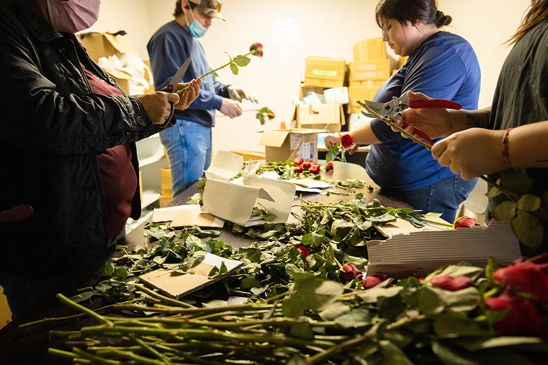 Volunteers prepare roses with Mother's Day tags for the working mothers supported by California Farmworkers Foundation